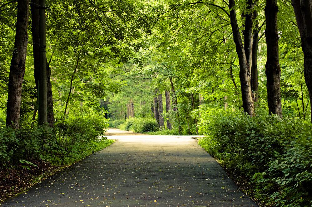 Измайловский парк   место семейного отдыха
