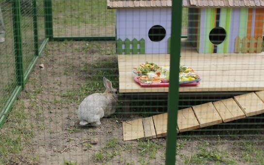 Мини-зоопарк в парке Горького