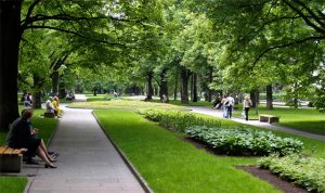 Благоустройство и озеленение на территории города Москвы