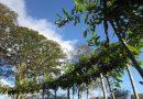 Зеленый луг Алана Кайна