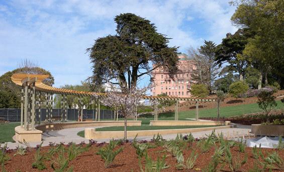 Lafayette park дерево